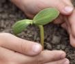 Название: depositphotos_5646346-Green-sprout-in-child-hand.jpg Просмотров: 175  Размер: 10,7 Кб