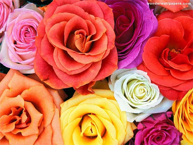 Нажмите на изображение для увеличения Название: flower_wallpapers_06_800_600.jpg Просмотров: 18 Размер:111,4 Кб ID:58841