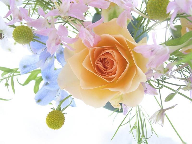 Нажмите на изображение для увеличения Название: flowers.jpg Просмотров: 15 Размер:58,0 Кб ID:58864