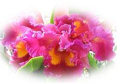 Нажмите на изображение для увеличения Название: orchidee_ecarte_1409.jpg Просмотров: 20 Размер:10,7 Кб ID:58867