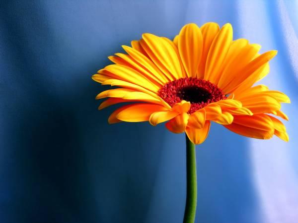 Нажмите на изображение для увеличения Название: posterlux-cveti_rasteniya-flowers_photograph_35.jpg Просмотров: 19 Размер:24,1 Кб ID:58890