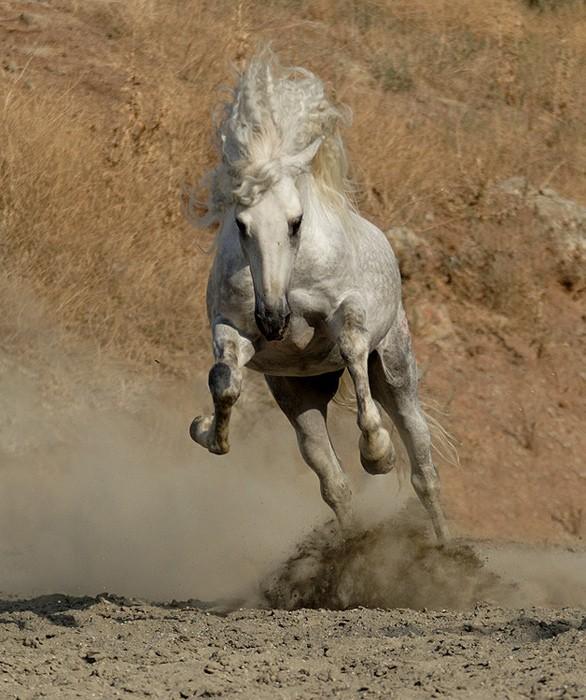 Нажмите на изображение для увеличения Название: лошадь.jpg Просмотров: 69 Размер:117,7 Кб ID:59515