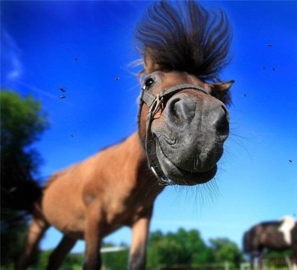 Нажмите на изображение для увеличения Название: смешная лошадь.jpg Просмотров: 18 Размер:86,1 Кб ID:59516