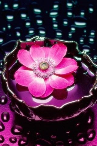 Нажмите на изображение для увеличения Название: цветок.jpg Просмотров: 23 Размер:47,5 Кб ID:60170