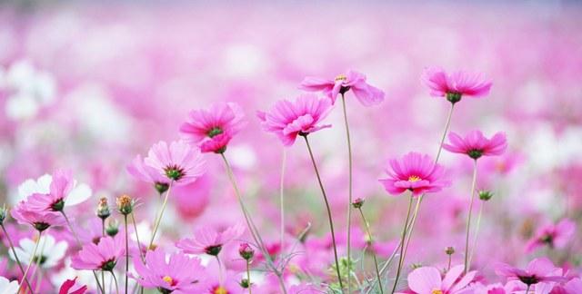Нажмите на изображение для увеличения Название: short_field_with_flowers.jpg Просмотров: 17 Размер:51,6 Кб ID:60412