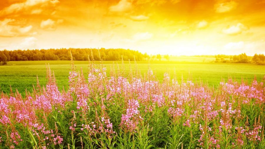 Нажмите на изображение для увеличения Название: summer-flowers-1920x1080-wallpaper-5426.jpg Просмотров: 26 Размер:95,2 Кб ID:60948