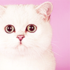 Название: cat-001.png Просмотров: 23  Размер: 15,1 Кб