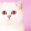 Название: cat-001.png Просмотров: 24  Размер: 15,1 Кб