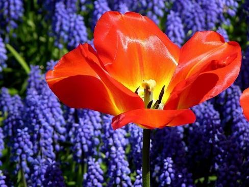 Нажмите на изображение для увеличения Название: large_beautiful_flowers_56694.jpg Просмотров: 25 Размер:163,8 Кб ID:61330
