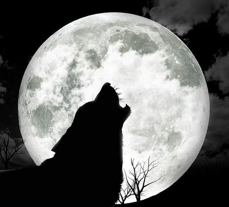 Нажмите на изображение для увеличения Название: волк.jpg Просмотров: 14 Размер:51,0 Кб ID:61912