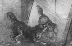 Нажмите на изображение для увеличения Название: Dog_and_mirrow_net1-300x193.jpg Просмотров: 88 Размер:20,2 Кб ID:62013