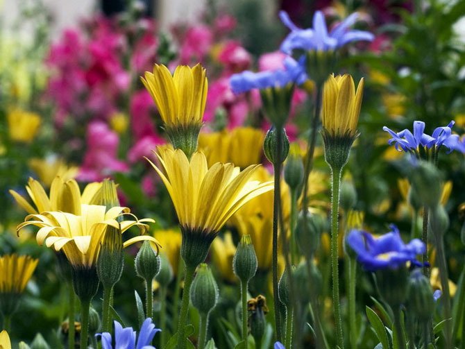 Нажмите на изображение для увеличения Название: Gorgeous-flowers-god-the-creator-17143806-670-503.jpg Просмотров: 25 Размер:122,0 Кб ID:62214