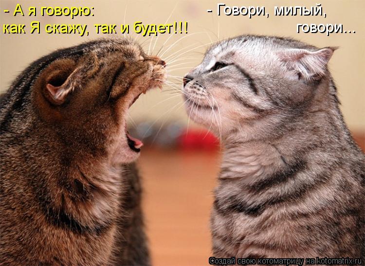Нажмите на изображение для увеличения Название: kotomatritsa_f.jpg Просмотров: 62 Размер:84,5 Кб ID:62255