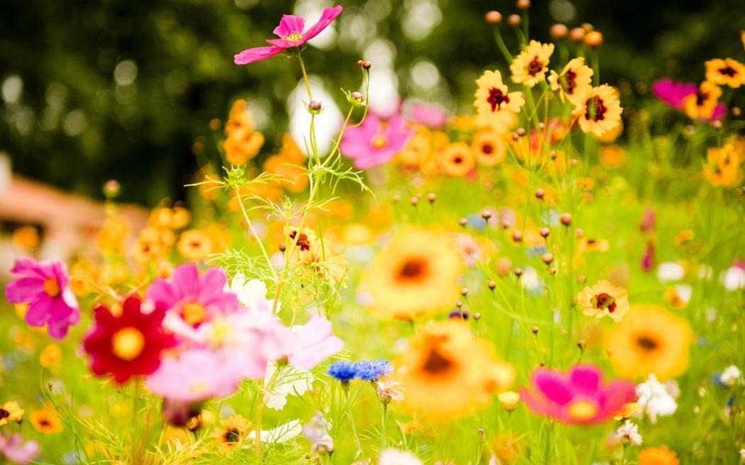 Нажмите на изображение для увеличения Название: vivid_flowers-wide.jpg Просмотров: 31 Размер:89,7 Кб ID:62286