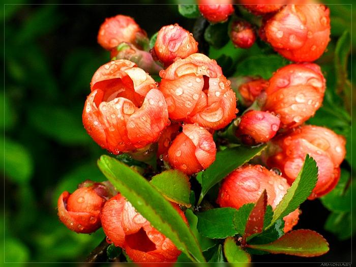 Нажмите на изображение для увеличения Название: spring_flowers_01.jpg Просмотров: 20 Размер:118,7 Кб ID:62477