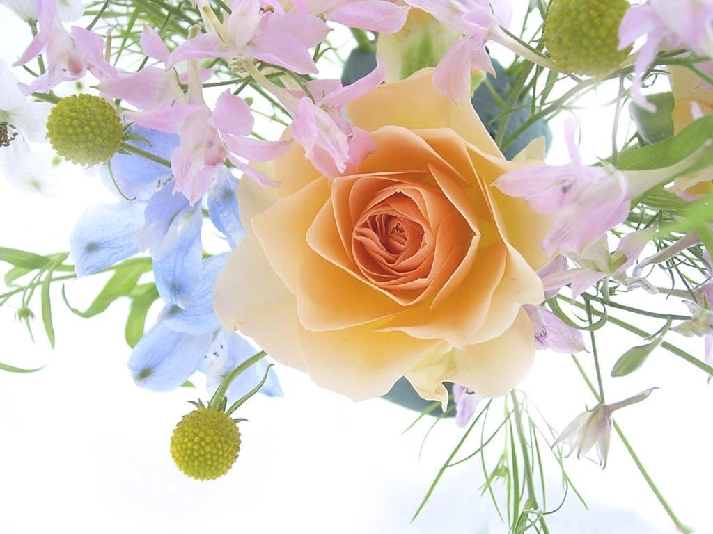Нажмите на изображение для увеличения Название: flowers.jpg Просмотров: 19 Размер:138,7 Кб ID:62494