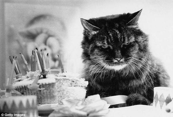 Нажмите на изображение для увеличения Название: 7343655-R3L8T8D-600-The-original-Grumpy-Cat-1.jpg Просмотров: 35 Размер:88,1 Кб ID:62531