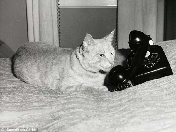 Нажмите на изображение для увеличения Название: 7344955-R3L8T8D-600-The-original-Grumpy-Cat-6.jpg Просмотров: 27 Размер:95,1 Кб ID:62537