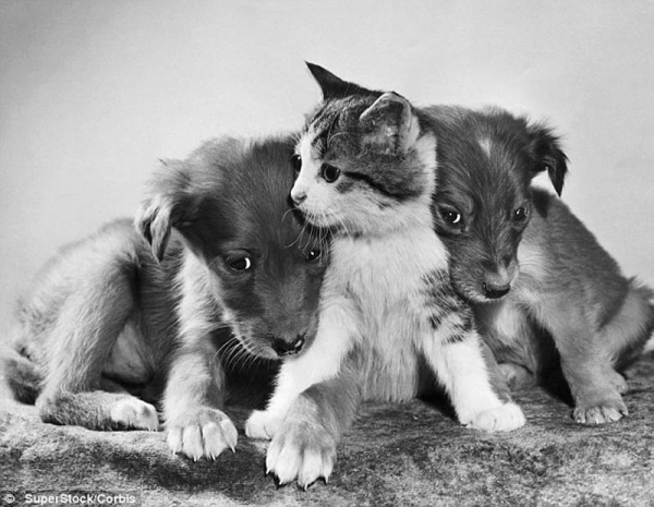 Нажмите на изображение для увеличения Название: 7346505-R3L8T8D-600-The-original-Grumpy-Cat-5.jpg Просмотров: 29 Размер:103,4 Кб ID:62540