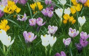 Нажмите на изображение для увеличения Название: Nature_Flowers__000715_32.jpg Просмотров: 11 Размер:36,8 Кб ID:62664