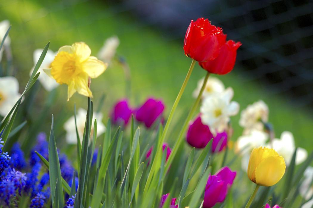Нажмите на изображение для увеличения Название: Colorful_spring_garden.jpg Просмотров: 9 Размер:67,6 Кб ID:62667