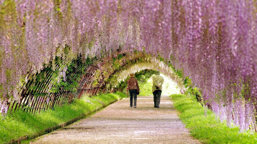Нажмите на изображение для увеличения Название: Spring-Garden-Wallpapers-1920x1080.jpg Просмотров: 10 Размер:147,1 Кб ID:62668