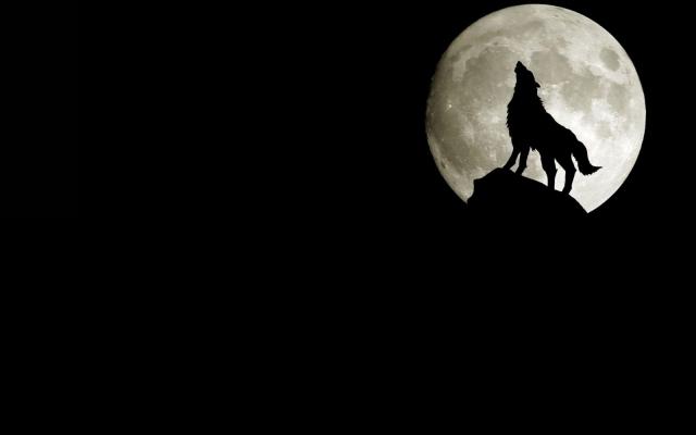 Нажмите на изображение для увеличения Название: wpapers_ru_Волк-на-фоне-луны.jpg Просмотров: 20 Размер:24,2 Кб ID:63305