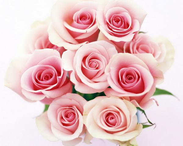 Нажмите на изображение для увеличения Название: розы.jpg Просмотров: 15 Размер:80,4 Кб ID:63389