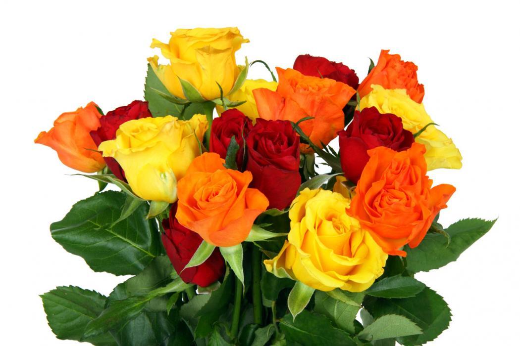 Нажмите на изображение для увеличения Название: opt-flowers-zakaz.jpg Просмотров: 17 Размер:78,4 Кб ID:64441
