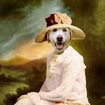 Нажмите на изображение для увеличения Название: суперская собака..jpg Просмотров: 16 Размер:5,5 Кб ID:64757