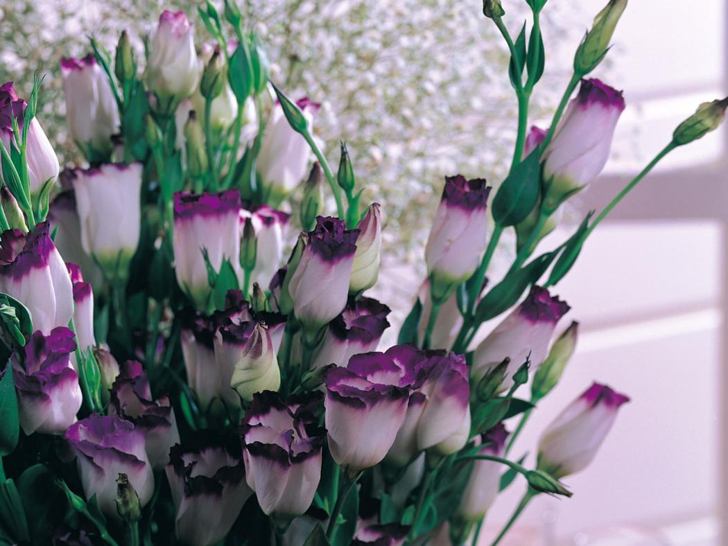 Нажмите на изображение для увеличения Название: Flower_18011.jpg Просмотров: 15 Размер:100,6 Кб ID:66091