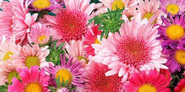 Нажмите на изображение для увеличения Название: flowers2.jpg Просмотров: 13 Размер:79,2 Кб ID:66232