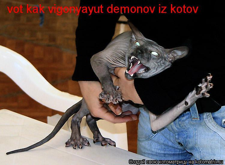 Нажмите на изображение для увеличения Название: kotomatritsa_LM.jpg Просмотров: 35 Размер:59,8 Кб ID:66410