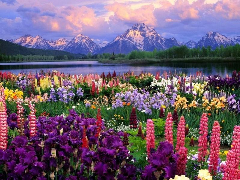 Нажмите на изображение для увеличения Название: foto-field-of-flowers.jpg Просмотров: 9 Размер:109,3 Кб ID:66503