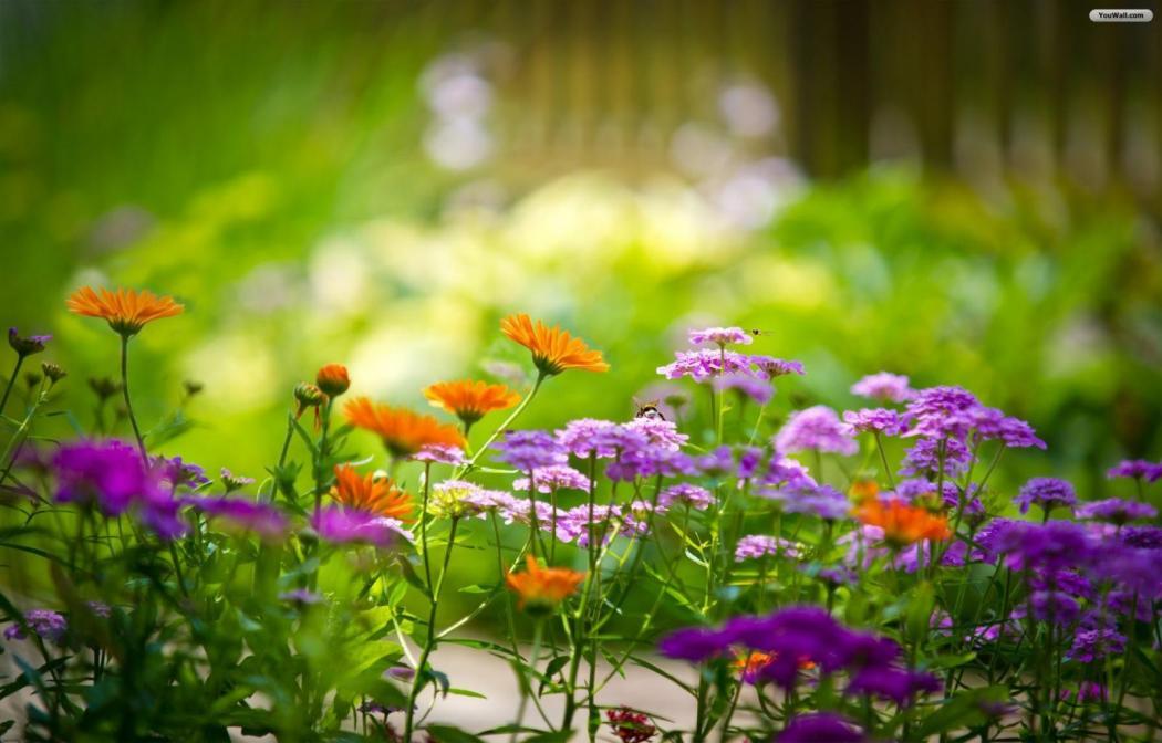 Нажмите на изображение для увеличения Название: wonderful-flowers-wallpaper-1600x1024.jpg Просмотров: 11 Размер:81,9 Кб ID:66659