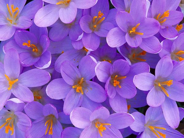Нажмите на изображение для увеличения Название: Flowers11_1024x768.jpg Просмотров: 8 Размер:122,9 Кб ID:66714