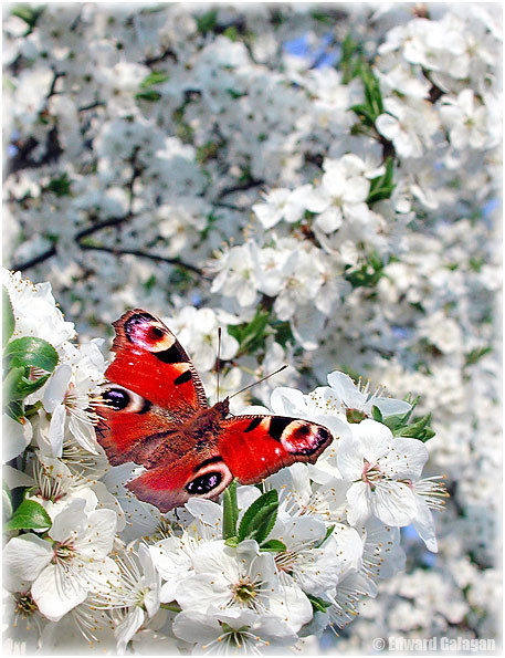 Нажмите на изображение для увеличения Название: бабочка.jpg Просмотров: 9 Размер:105,3 Кб ID:66740