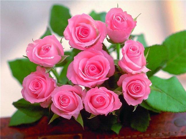 Нажмите на изображение для увеличения Название: розы.jpg Просмотров: 6 Размер:54,5 Кб ID:66814