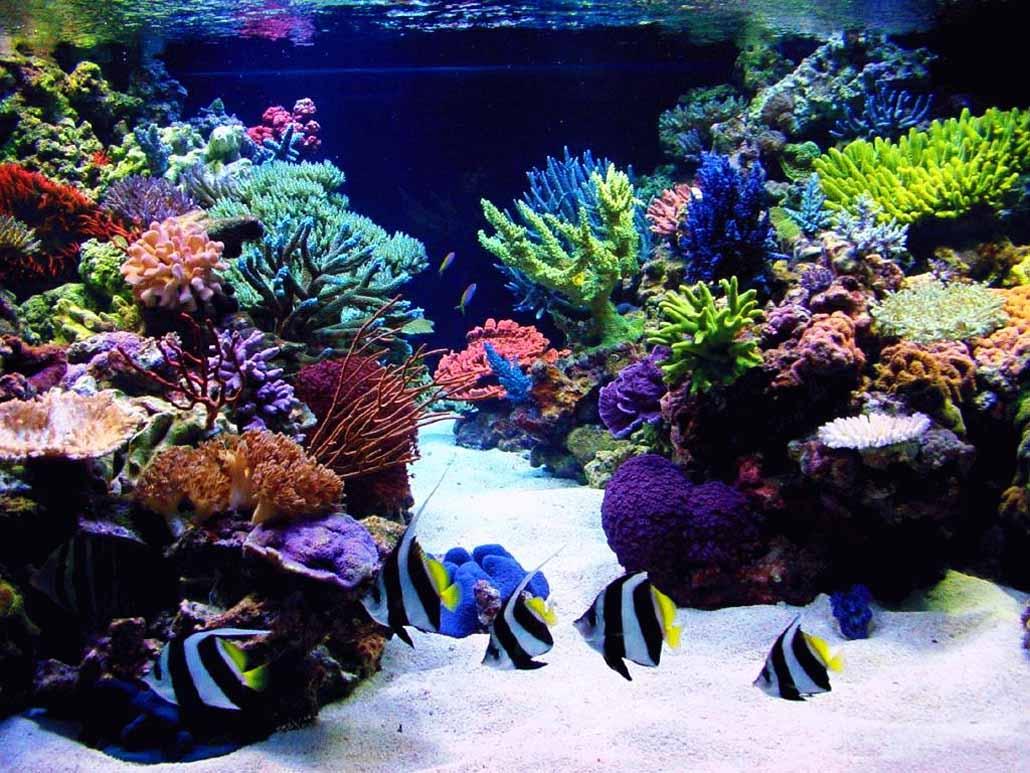 Нажмите на изображение для увеличения Название: korally_rif_kartinki_foto_04.jpg Просмотров: 12 Размер:149,1 Кб ID:67075