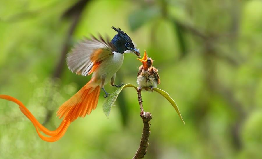 Нажмите на изображение для увеличения Название: Bird-of-paradise.jpg Просмотров: 32 Размер:54,9 Кб ID:68590