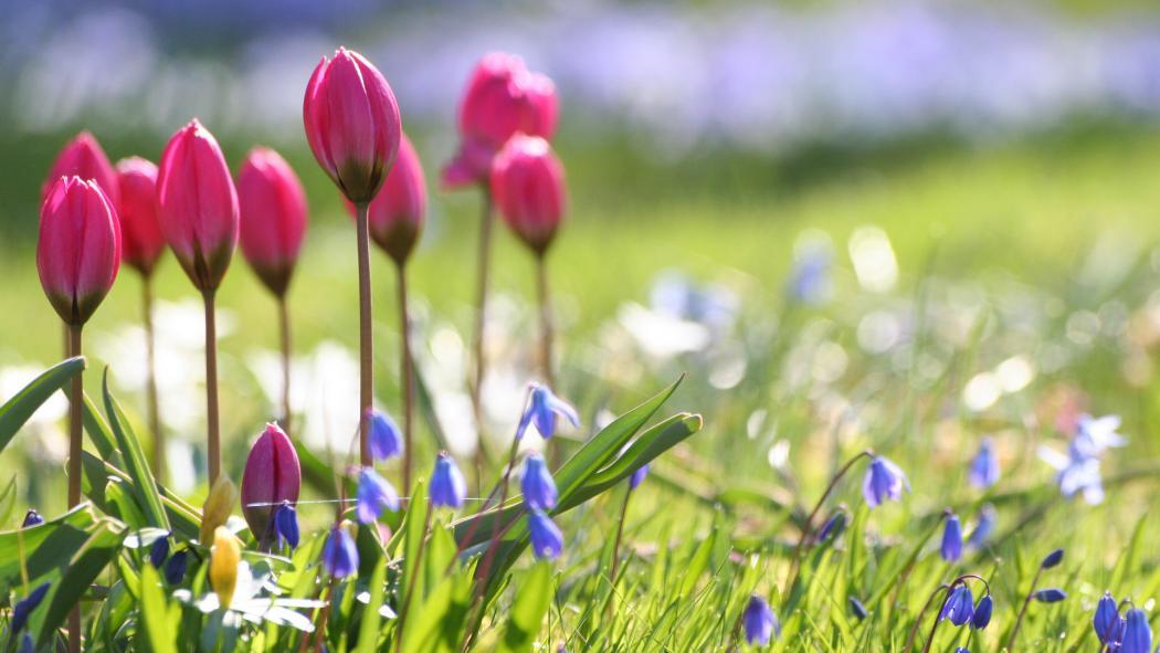 Нажмите на изображение для увеличения Название: весна-о-151.jpg Просмотров: 8 Размер:73,3 Кб ID:68853