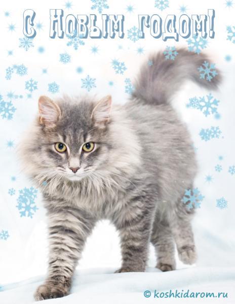 Нажмите на изображение для увеличения Название: кот.jpg Просмотров: 3 Размер:35,6 Кб ID:71163