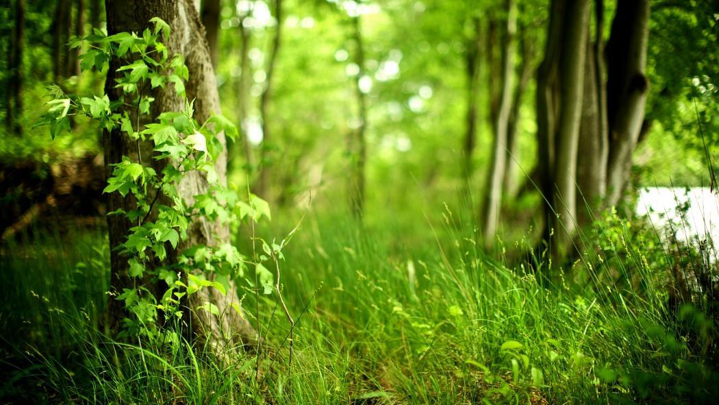 Нажмите на изображение для увеличения Название: gandex.ru-26_8086_summer-forest.jpg Просмотров: 18 Размер:122,1 Кб ID:72244