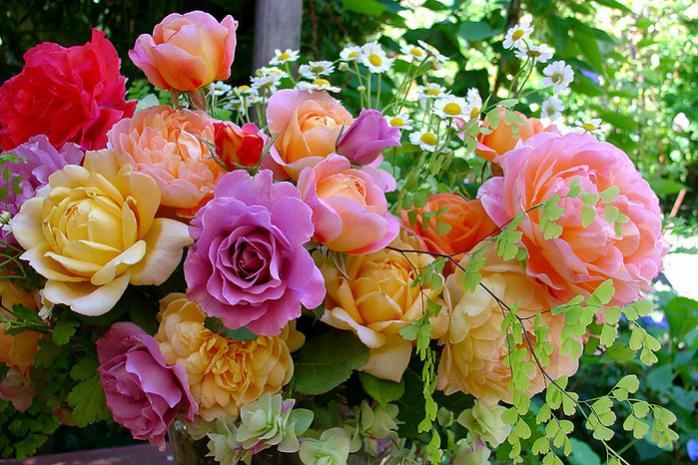 Нажмите на изображение для увеличения Название: розы.jpg Просмотров: 10 Размер:75,9 Кб ID:73086