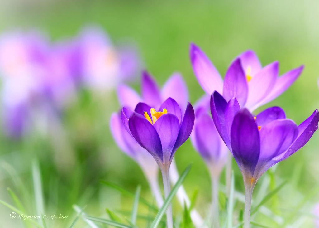 Нажмите на изображение для увеличения Название: spring_flower_by_raylau-d4rremu.jpg Просмотров: 7 Размер:95,5 Кб ID:73103