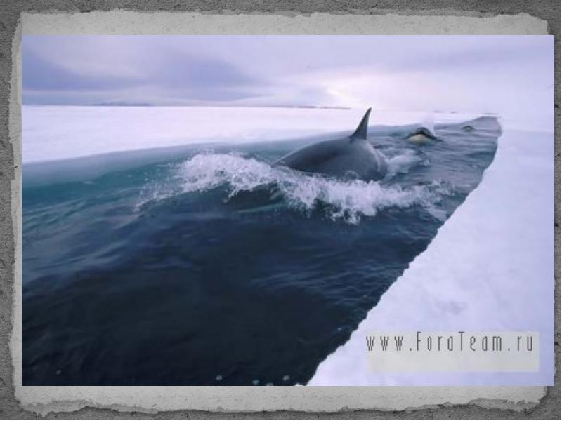 Нажмите на изображение для увеличения Название: хожу за ледоколами.jpg Просмотров: 18 Размер:42,5 Кб ID:73476