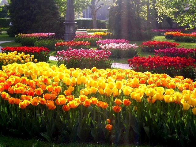 Нажмите на изображение для увеличения Название: Тюльпаны..jpg Просмотров: 5 Размер:129,8 Кб ID:73491
