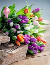 Нажмите на изображение для увеличения Название: тюльпаны и деньги.jpg Просмотров: 4 Размер:19,6 Кб ID:73618