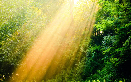 Нажмите на изображение для увеличения Название: Nature_Forest_Sun_beams_in_the_wood_036268_.jpg Просмотров: 9 Размер:56,7 Кб ID:73844