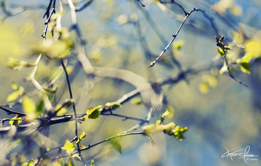 Нажмите на изображение для увеличения Название: Dance_in_a_Spring_Wind_by_Korpinkynsi.jpg Просмотров: 10 Размер:107,2 Кб ID:73852